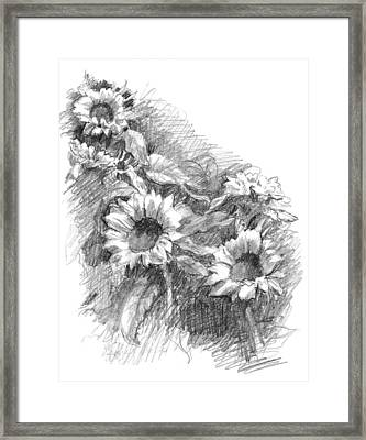 Sunflowers Framed Print by Sarah Parks