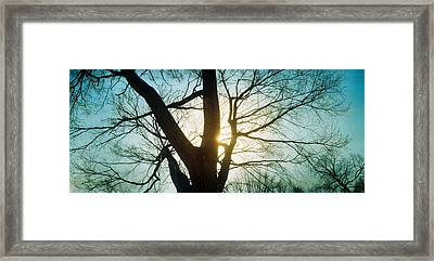 Sunlight Shining Through A Bare Tree Framed Print by Panoramic Images