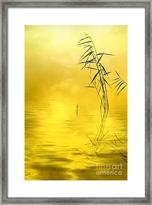 Sunlight Framed Print by Veikko Suikkanen