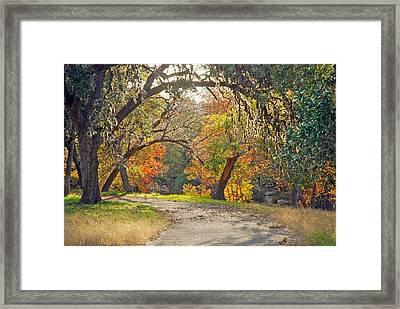 Sunlit Fall Colors Framed Print by Robert Anschutz
