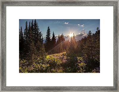 Sunlit Flower Meadows Framed Print by Mike Reid
