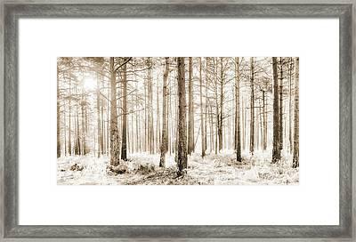 Sunlit Hazy Trees In Neutral Colors Framed Print by Natalie Kinnear