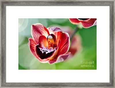 Sunlit Miniature Orchid Framed Print by Kaye Menner