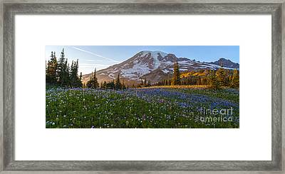 Sunlit Rainier Meadows Framed Print by Mike Reid