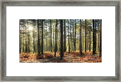 Sunlit Trees On The Ashdown Forest Framed Print by Natalie Kinnear