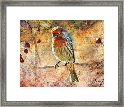 Sunning Framed Print by Betty LaRue