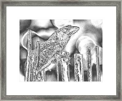 Sunning Lizard Chromed Framed Print by Belinda Lee