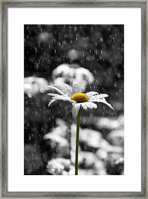 Sunny Disposition Despite Showers Framed Print by Lisa Knechtel