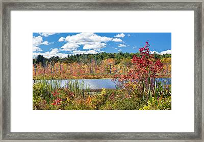 Sunny Fall Day Framed Print by Bill Wakeley