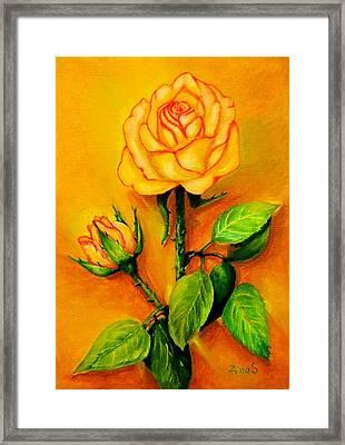 Sunny Rose Framed Print by Zina Stromberg