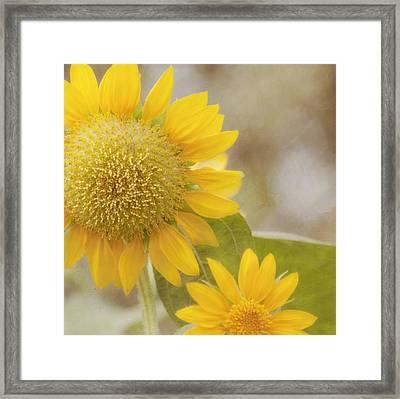 Sunny Side Up Framed Print by Kim Hojnacki