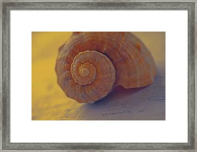 Sunny Thoughts Framed Print by Bonnie Bruno