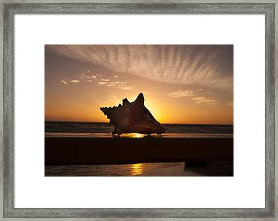 Sunrise Conch Framed Print by Jean Noren