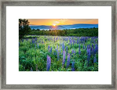 Sunrise From Sampler Fields - Sugar Hill New Hampshire Framed Print by Thomas Schoeller