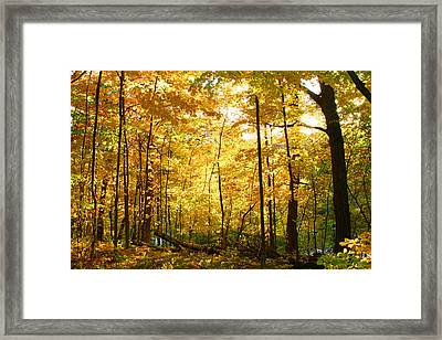 Sunrise In The Forest Framed Print by James Hammen