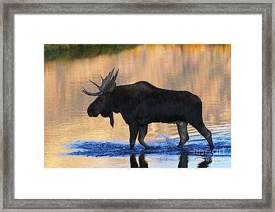 Sunrise Stroll Framed Print by Mark Kiver