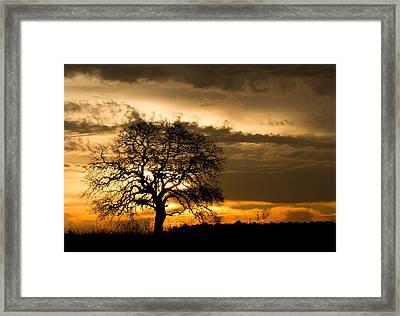 Sunrise Tree Framed Print by Robert Woodward