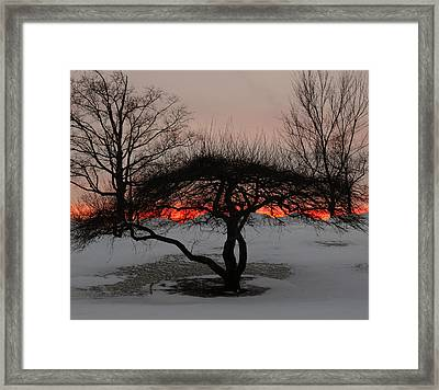 Sunroof Framed Print by Luke Moore