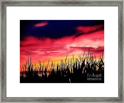 Sunset 365 62 Framed Print by Tina M Wenger