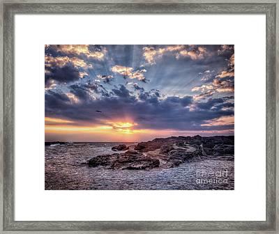 Sunset Bird Framed Print by John Swartz