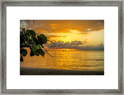Sunset Fruit Framed Print by Todd Reese