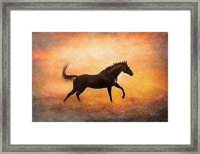 Sunset Gallop Framed Print by Pamela Hagedoorn