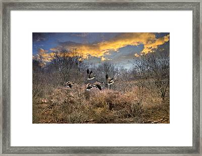 Sunset Geese Framed Print by Christina Rollo