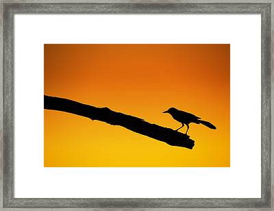 Sunset Grackle Silhouette Framed Print by Andres Leon