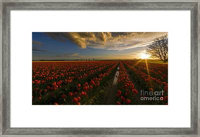 Sunset In The Skagit Valley Framed Print by Mike Reid