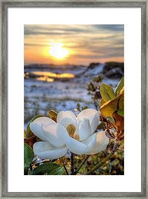 Sunset Magnolia Framed Print by JC Findley