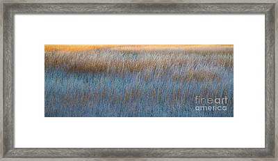 Sunset Marsh In Blue And Gold Framed Print by Jo Ann Tomaselli