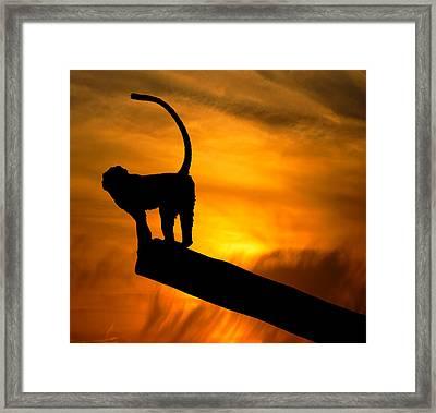 Monkey / Sunset Framed Print by Martin Newman