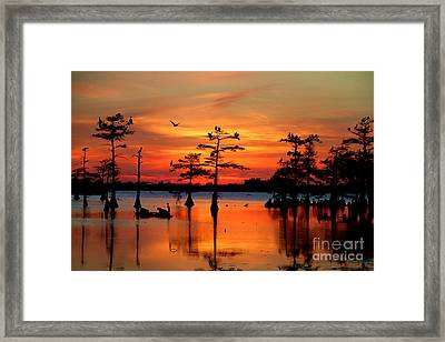 Sunset On The Bayou Framed Print by Carey Chen