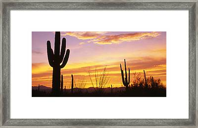 Sunset Saguaro Cactus Saguaro National Framed Print by Panoramic Images