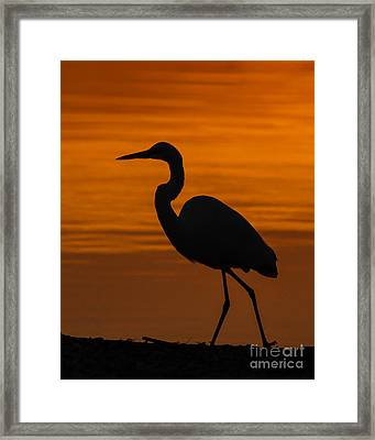 Sunset Stroll Framed Print by Carl Jackson