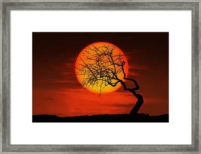 Sunset Tree Framed Print by Bess Hamiti