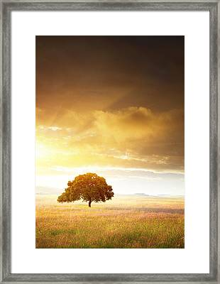 Sunset Tree Framed Print by Carlos Caetano
