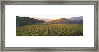Sunset, Vineyard, Napa Valley Framed Print by Panoramic Images