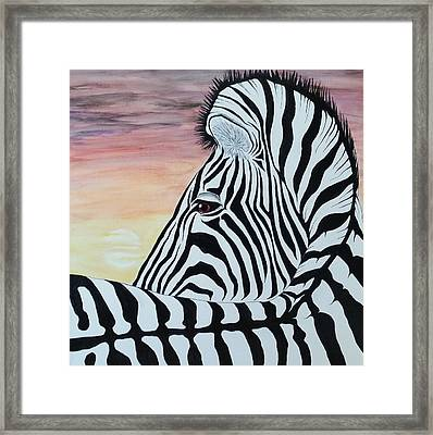 Sunset Zebra Framed Print by Steven White