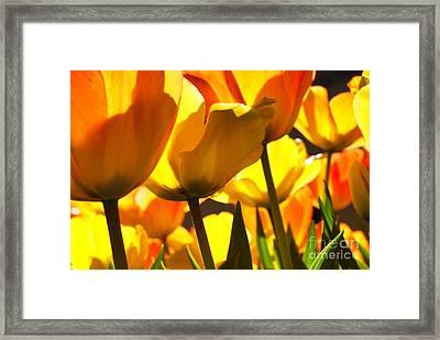 Sunshine 2 Framed Print by Sabine Jacobs