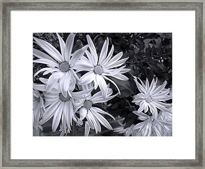 Sunshine And Shadow Black And White Framed Print by Barbara McDevitt
