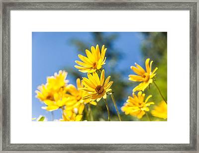 Sunshine Framed Print by Chad Dutson