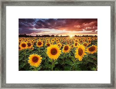 Sunshine Framed Print by Michael Breitung