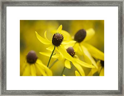 Sunshine On A Cloudy Day Framed Print by Penny Meyers