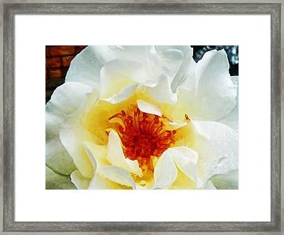 Sunshine On A Rainy Day  Framed Print by Steve Taylor