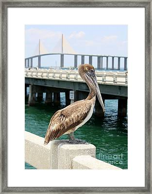 Sunshine Skyway And Pelican Framed Print by Carol Groenen