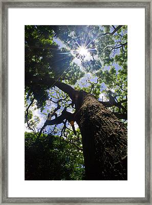 Sunshine Through The Trees Framed Print by Matt Radcliffe