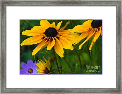 Sunshine Framed Print by Timothy J Berndt