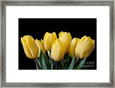 Sunshine Tulips Framed Print by Tracy  Hall