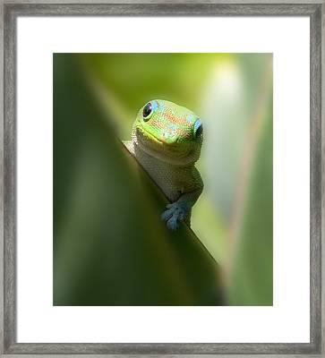 Sup Homie Framed Print by Richard Shelton